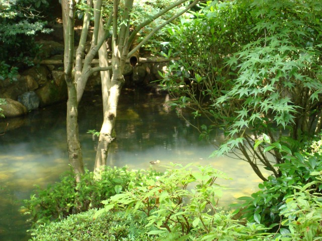 Japan, a pond in Koyto