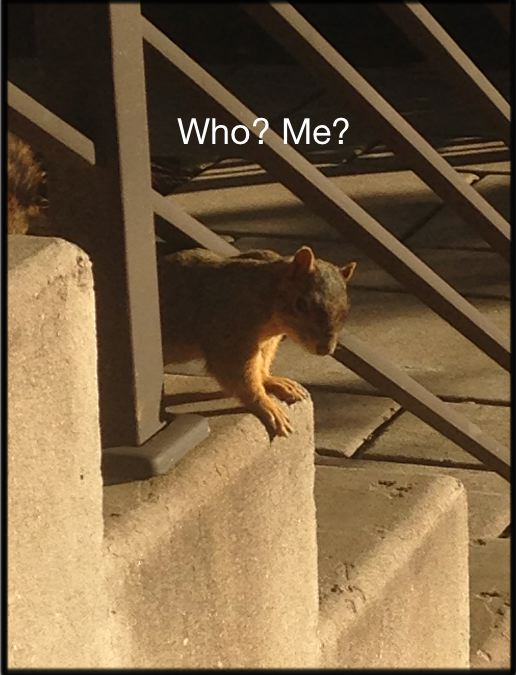 Words and Pictures - Squirrel Who Me?
